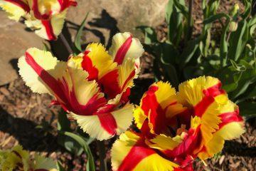 Frühjahrs- und Herbstaufbereitung der Gartenanlage